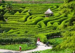Glendurgan Garden Cornwall